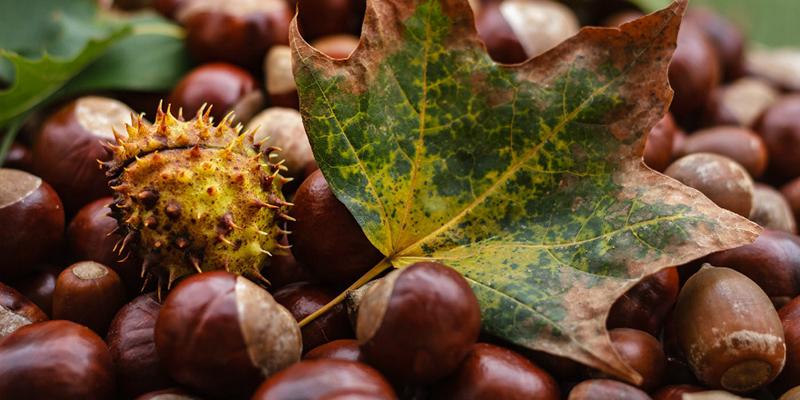 Las frutas de otoño - Mermeladas La Vieja Fábrica